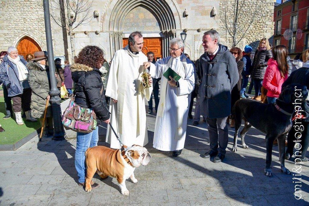 Resultat d'imatges de benedicció d'animals sant antoni