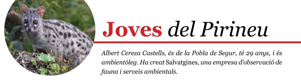 Joves Albert Cereza
